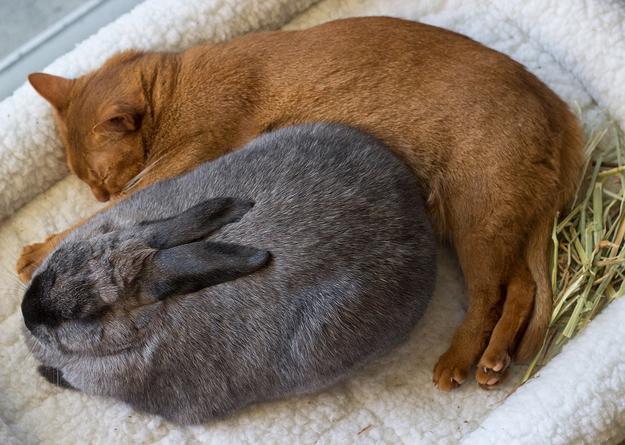 смешные фото животных (625x445, 241Kb)