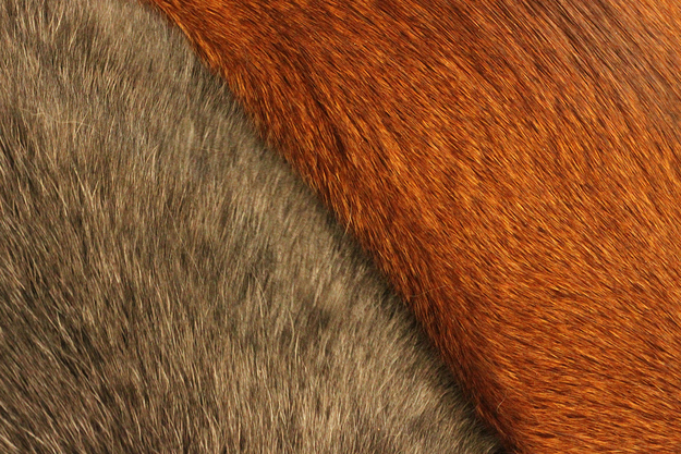 смешные фото животных 6 (625x417, 337Kb)