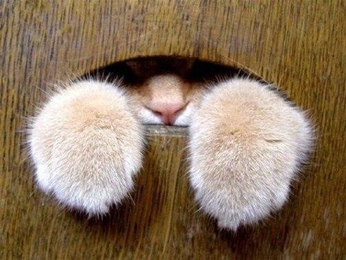 Картинки по запросу кoшачьи лапки