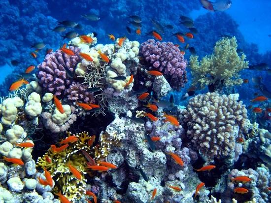 подводный мир.jpg8 (550x412, 144Kb)