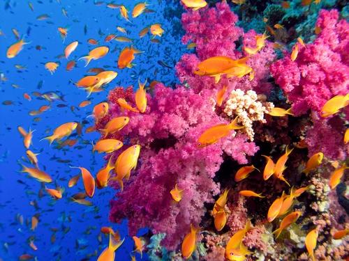 Сказочный подводный мир красного моря