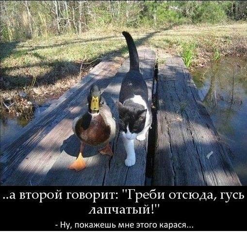 кот и гусь (509x478, 65Kb)