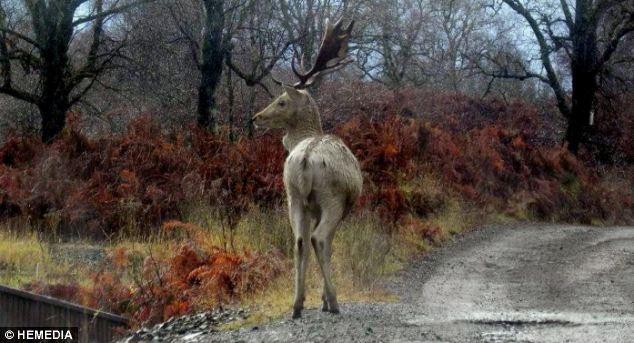 deer-002 (634x343, 53Kb)