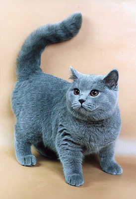 10 распространённых мифов о кошках (274x400, 65Kb)