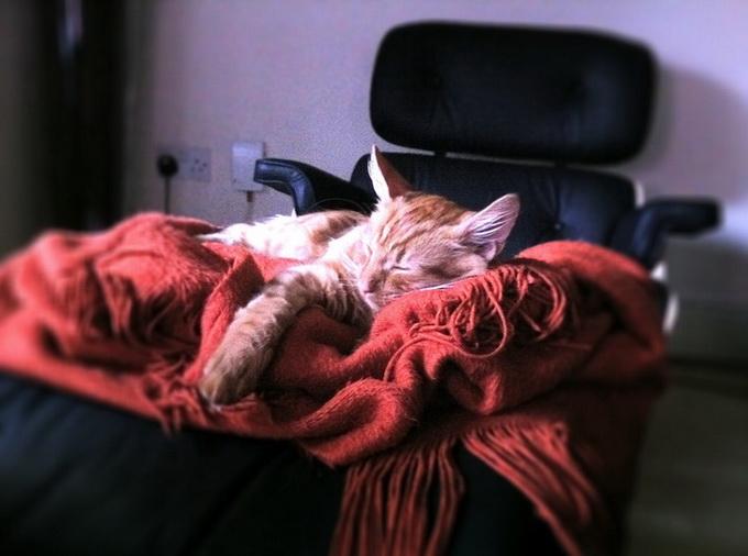 прикольные фото кошек 5 (680x506, 88Kb)