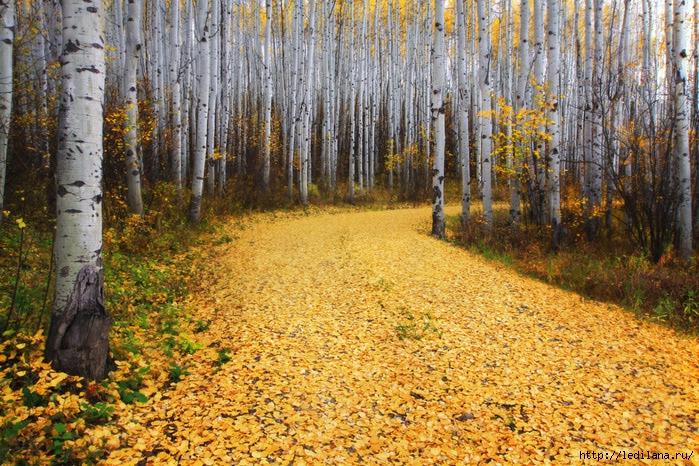 фото17 осень (700x466, 386Kb)