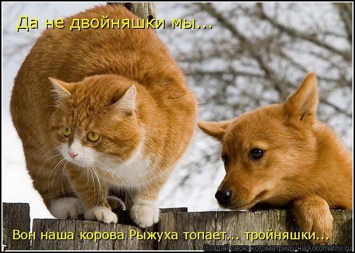 catmatrix_1120_45 (700x499, 89Kb)
