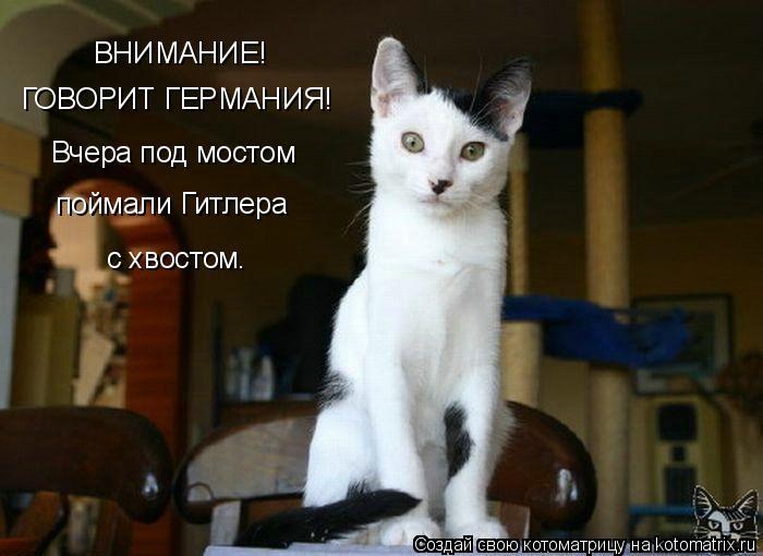 kotomatrix_07 (700x510, 44Kb)