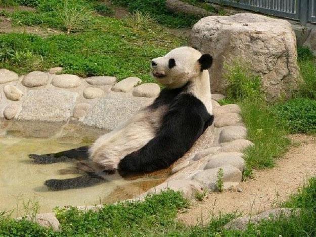 прикольные фото животных 3 (625x469, 149Kb)