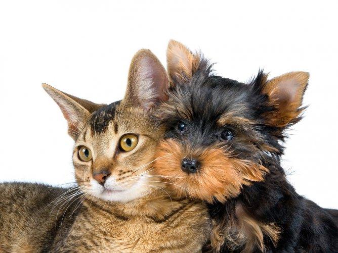 кошка и собака (668x501, 70Kb)