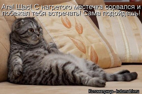 kotomatritsa_6f (560x374, 42Kb)