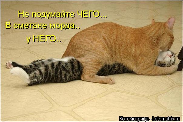 kotomatritsa_4- (604x403, 44Kb)