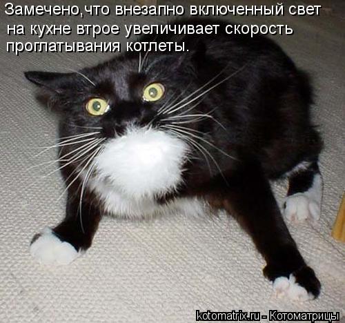 kotomatritsa_Gx (500x468, 47Kb)