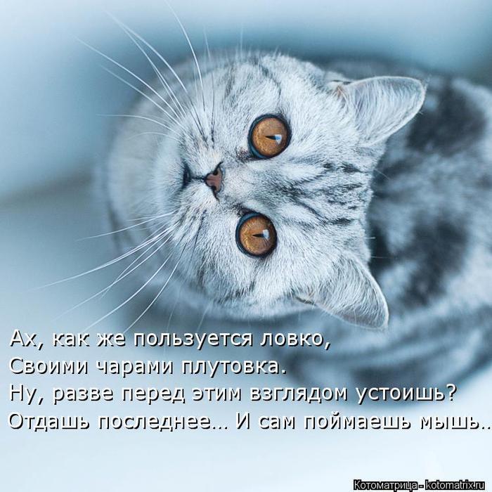 kotomatritsa_J1 (700x700, 73Kb)