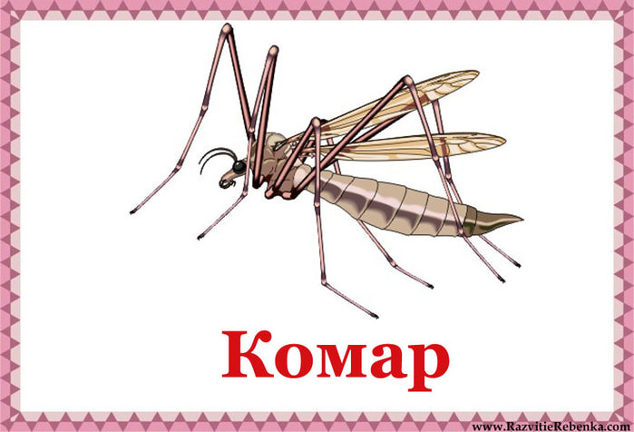 Комар (700x476, 63Kb)