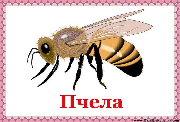Пчела (700x476, 69Kb)