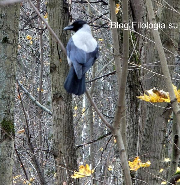 Птица на дереве в Архангельском/3241858_autumn12fh (600x617, 174Kb)