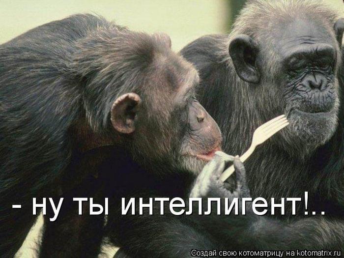 1254475239_hiop.ru_1254394022_365981 (650x525, 62Kb)