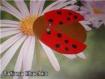 Превью пчелка jpg (260x195, 13Kb)