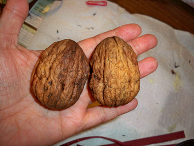2walnuts (400x300, 138Kb)
