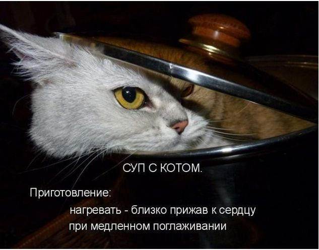 5016628_syp_s_kotom (633x497, 44Kb)