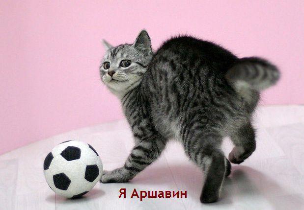 5016628_Arshavin (619x429, 35Kb)