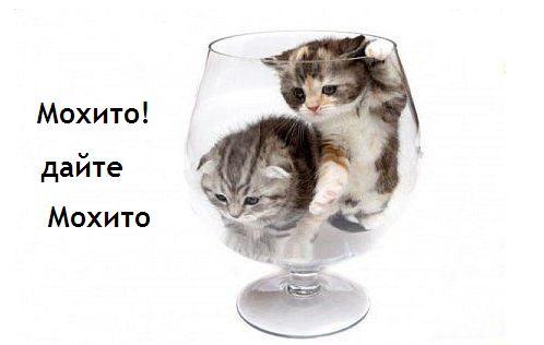 5016628_Bolshie_kotyati (498x316, 18Kb)