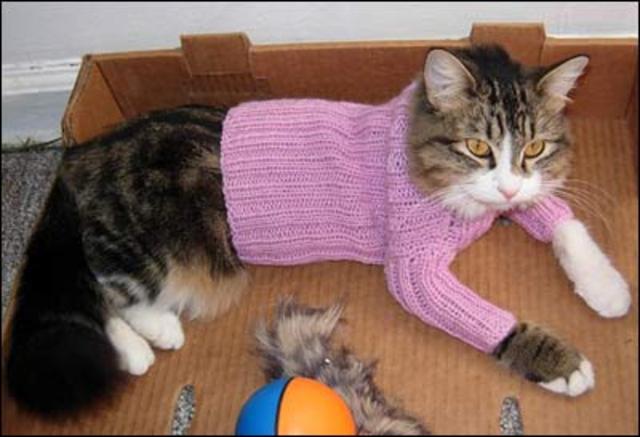 Tamzozware Одежду для котов сфинксов можно связать или сшить.