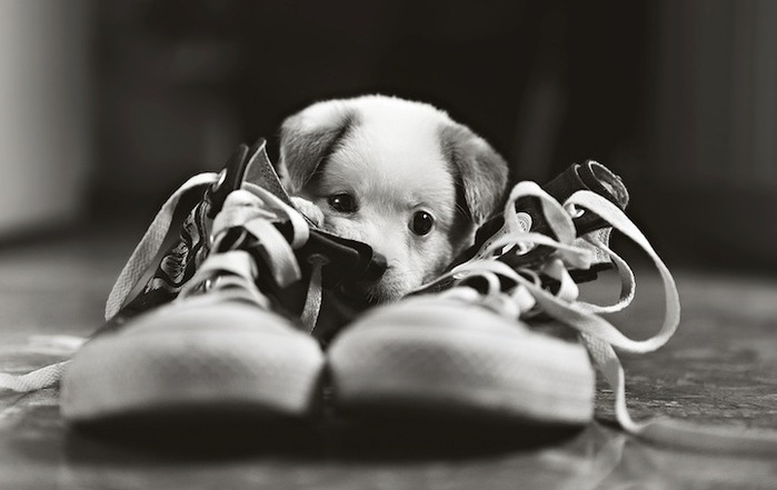смешной щенок фото 1 (700x441, 53Kb)