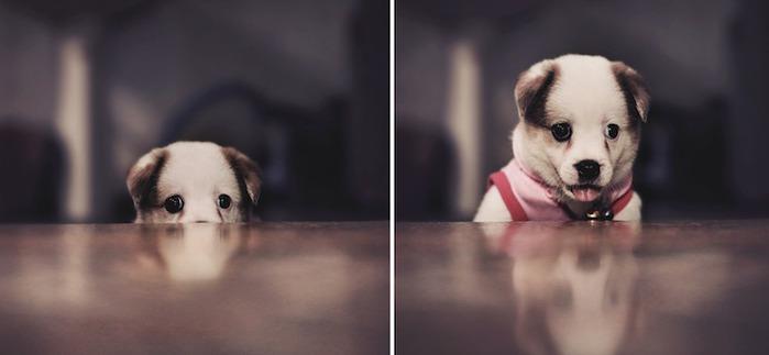 смешной щенок фото 3 (700x323, 32Kb)