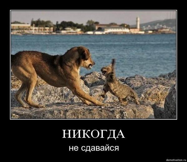 Посмотрит кавказский парнуху 22 фотография