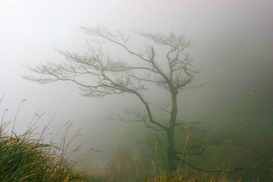 tree (550x367, 300Kb)