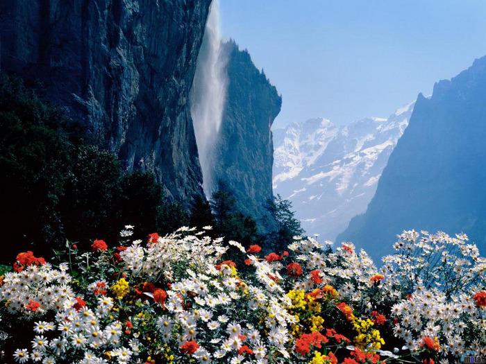 7119786_7074997_flowers_262 (700x525, 205Kb)