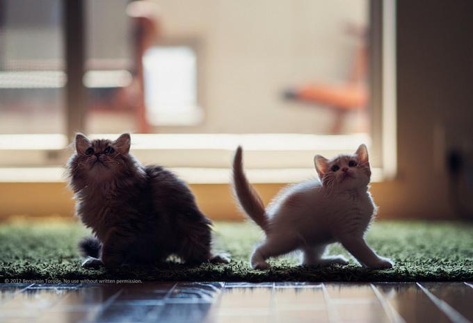 смешные котята фото 2 (680x465, 81Kb)