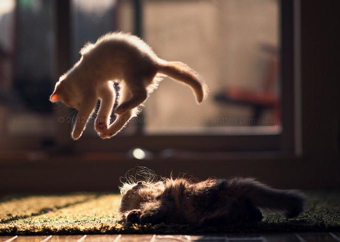 смешные котята фото 4 (680x485, 83Kb)