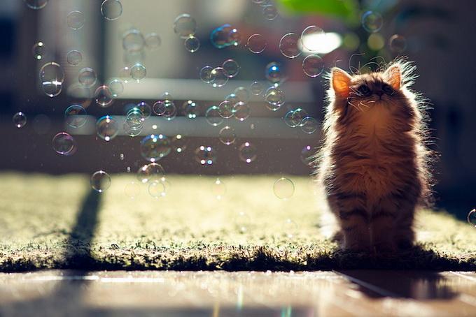 смешные котята фото 6 (680x454, 122Kb)