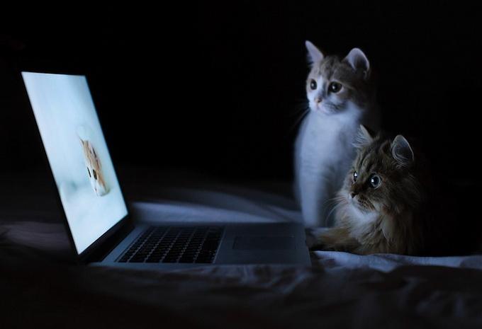 смешные котята фото 8 (680x465, 52Kb)