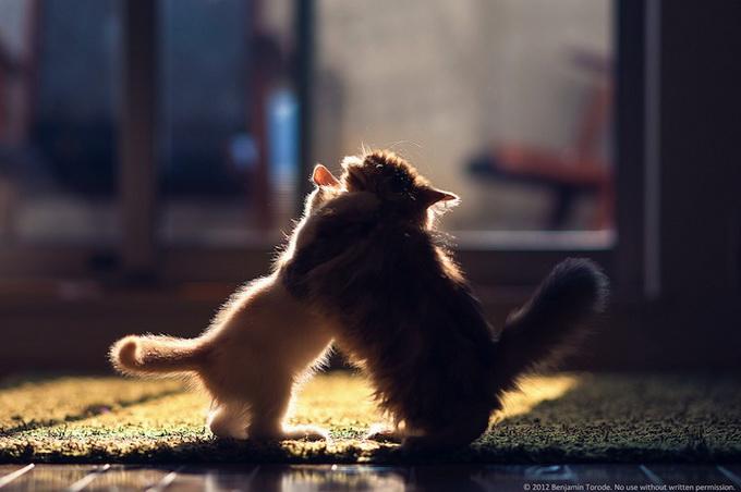 смешные котята фото 10 (680x452, 79Kb)
