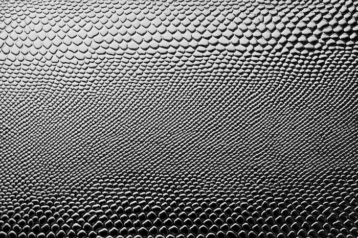 Reptile skin textures (7) (700x466, 341Kb)