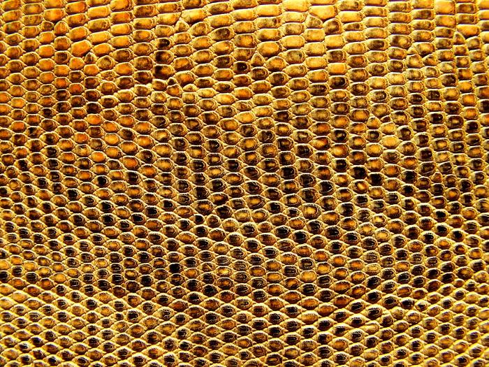 Reptile skin textures (9) (700x525, 850Kb)