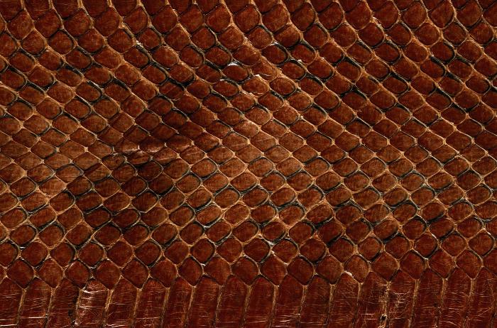 Reptile skin textures (13) (700x462, 592Kb)