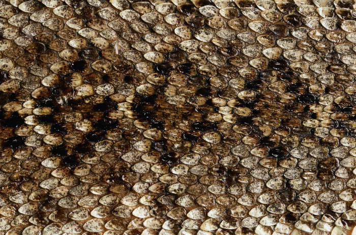 Reptile skin textures (15) (700x462, 122Kb)
