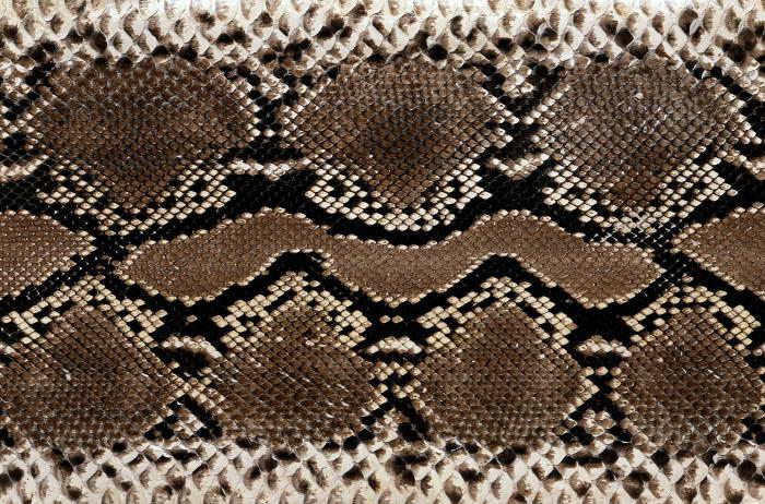 Reptile skin textures (17) (700x462, 121Kb)