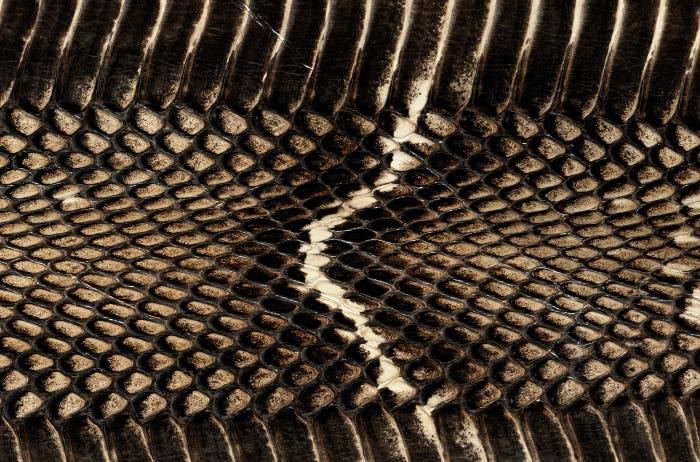 Reptile skin textures (19) (700x462, 103Kb)