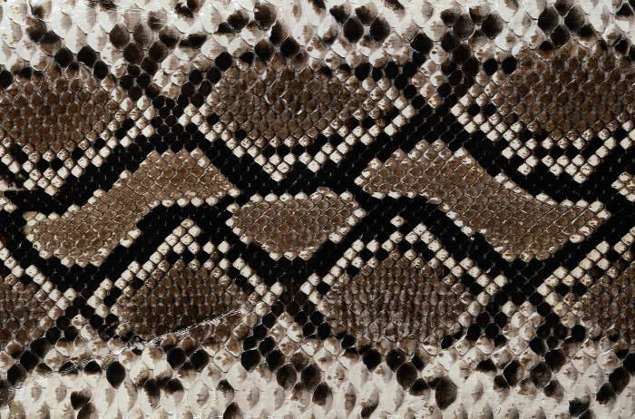 Reptile skin textures (20) (700x462, 102Kb)