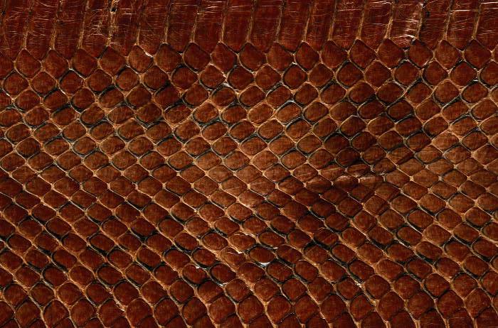 Reptile skin textures (22) (700x462, 89Kb)