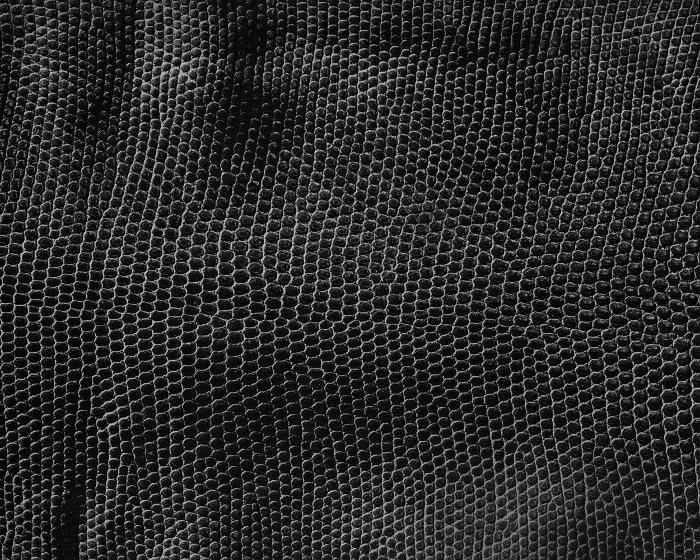 Reptile skin textures (28) (700x560, 370Kb)