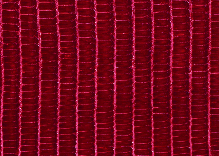 Reptile skin textures (38) (700x500, 480Kb)