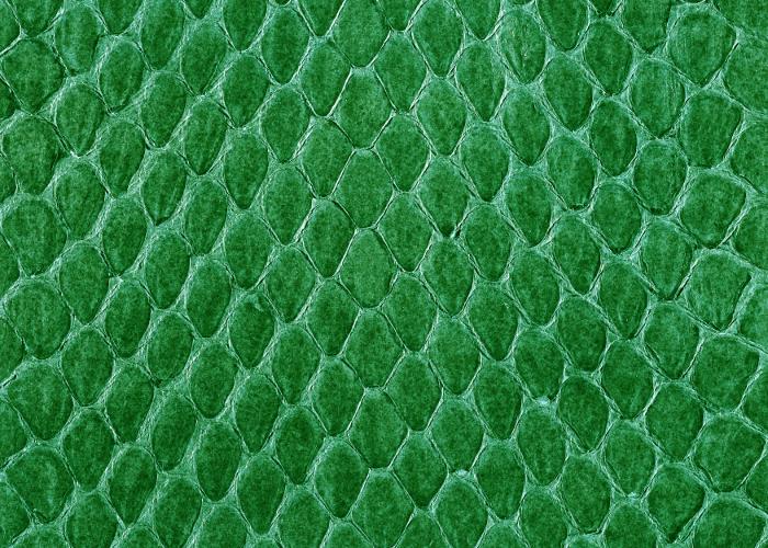 Reptile skin textures (49) (700x500, 540Kb)