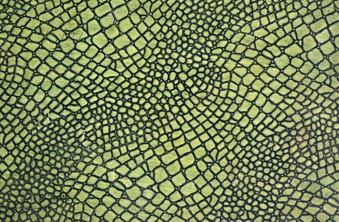 Reptile skin textures (53) (700x459, 642Kb)